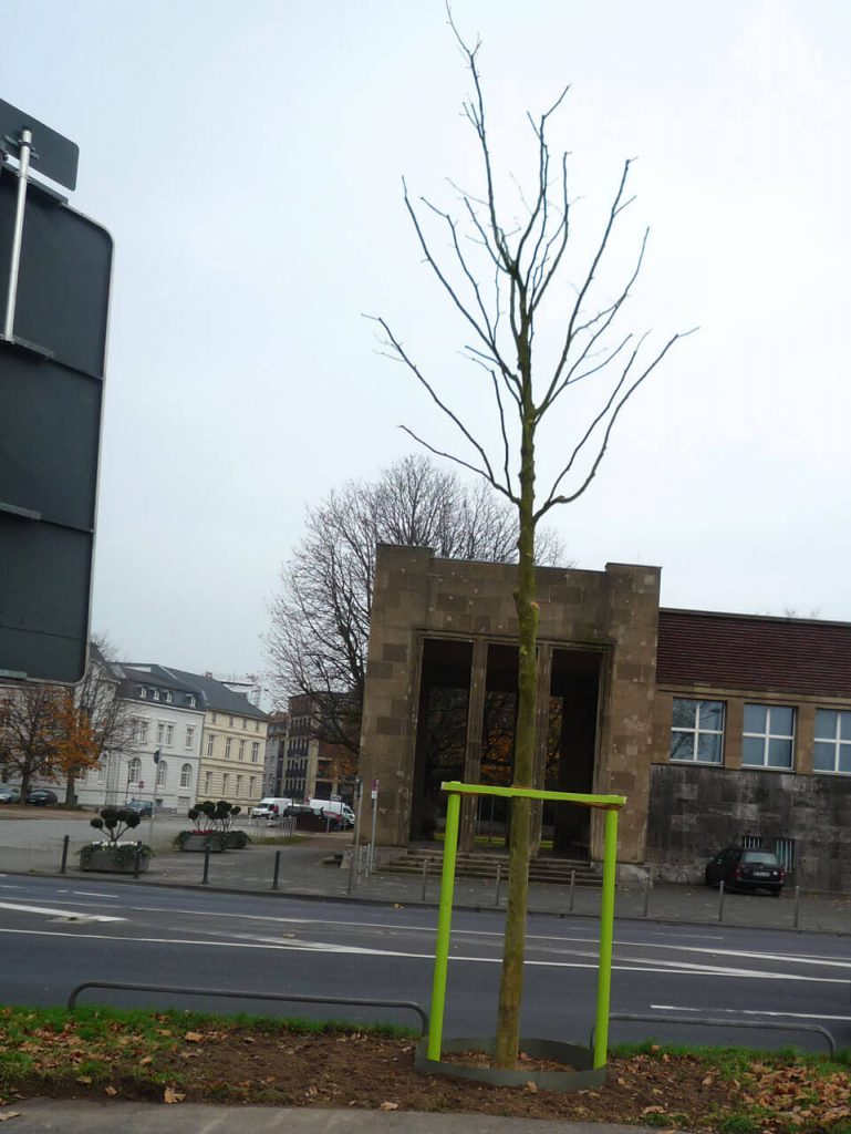 stadtbepflanzung_04